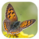 Gardensafari 'Moths and Butterflies' app